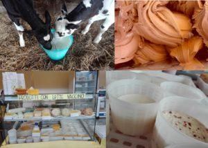 la nostra bottega: vitelli che mangiano latte, gelato, mercati e formaggi speziati